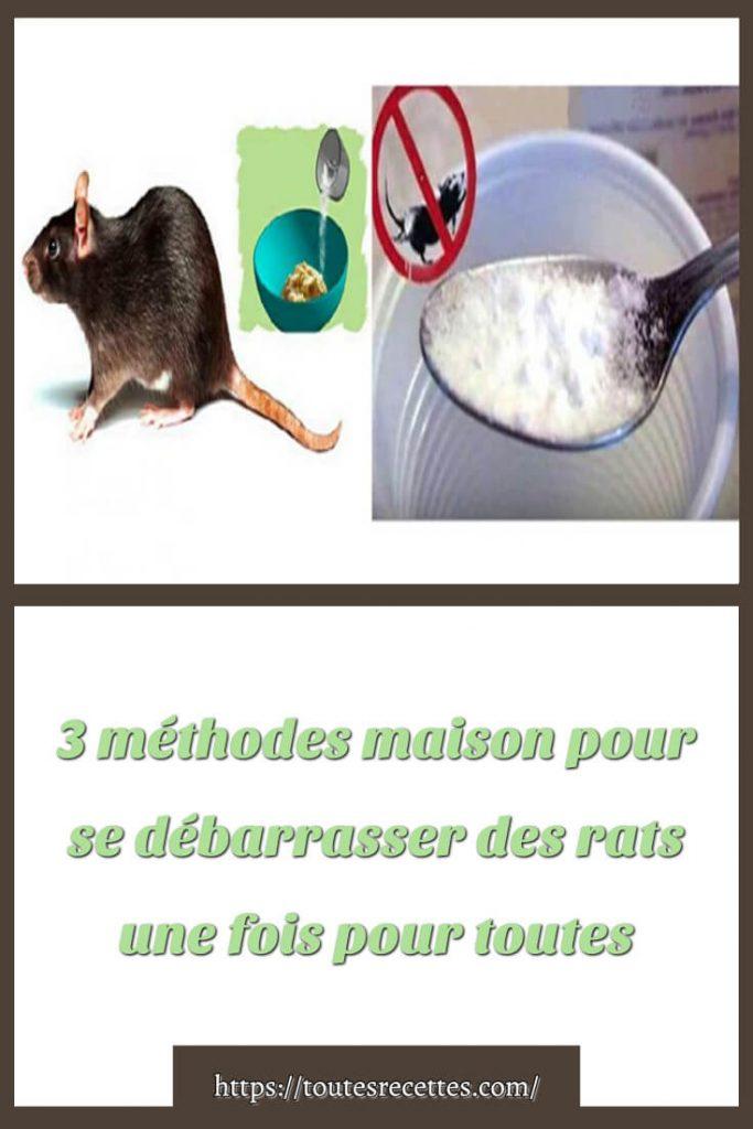 3 méthodes maison pour se débarrasser des rats une fois pour toutes