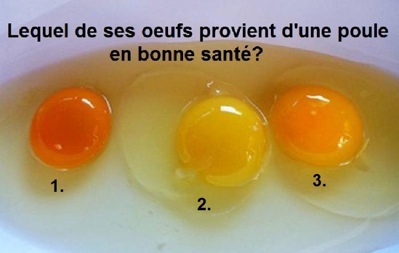 Qu'en est-il de la couleur des jaunes d'œufs