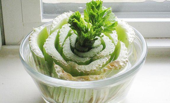 Astuces pour faire pousser les légumes: Le céleri